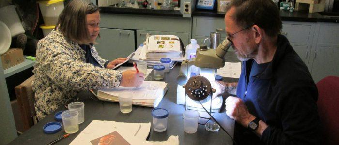 Volunteers sorting and identifying benthic macroinvertebrates at the CSI lab