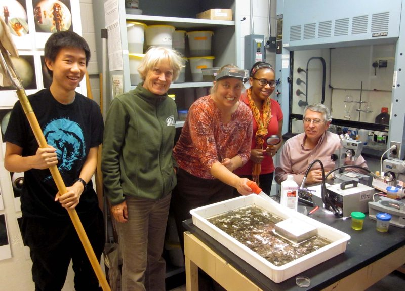 Volunteers at a biological monitoring open lab session.