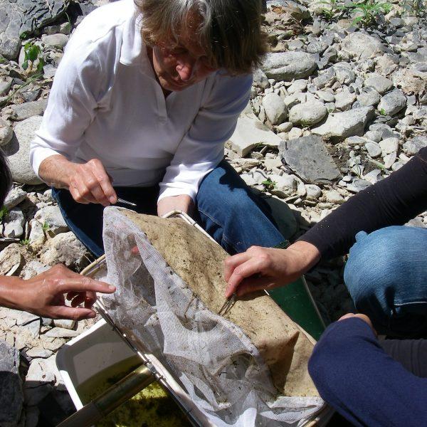 Biomonitoring volunteers pick stray macroinvertebrates off a recently used kicknet.